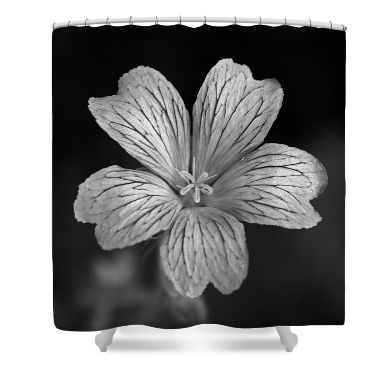 Flower Shower Curtain featuring the photograph Flower In Black And White by David Freuthal