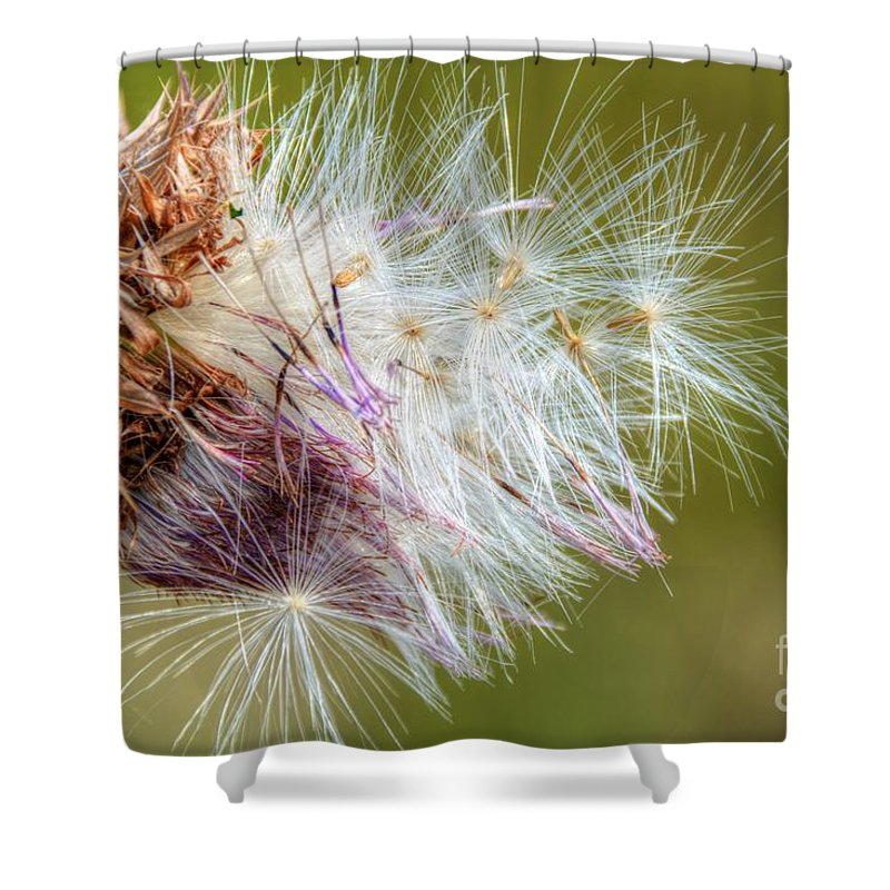 Weed Shower Curtain featuring the photograph Flower Of The Canada Thistle by M Dale