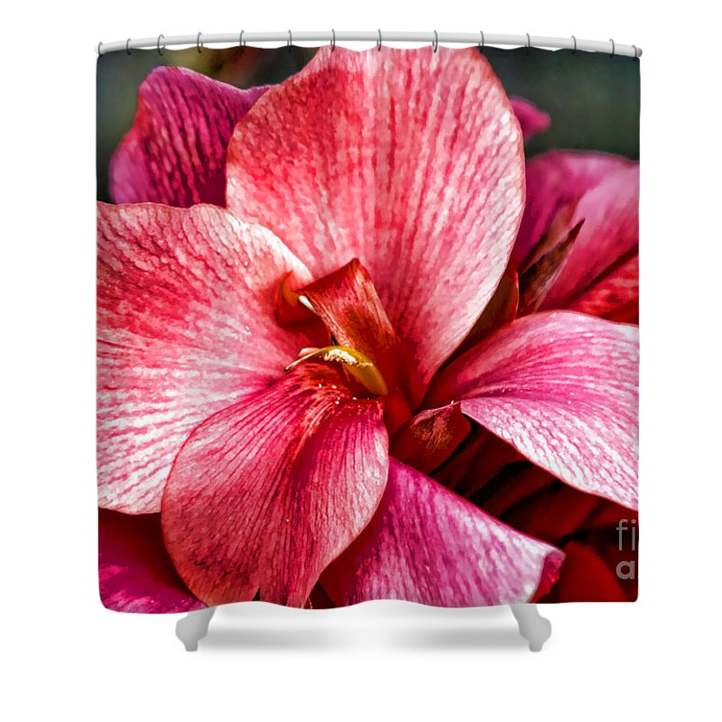 Pink Flowers Shower Curtain featuring the photograph Flower Power In Pink By Diana Sainz by Diana Raquel Sainz