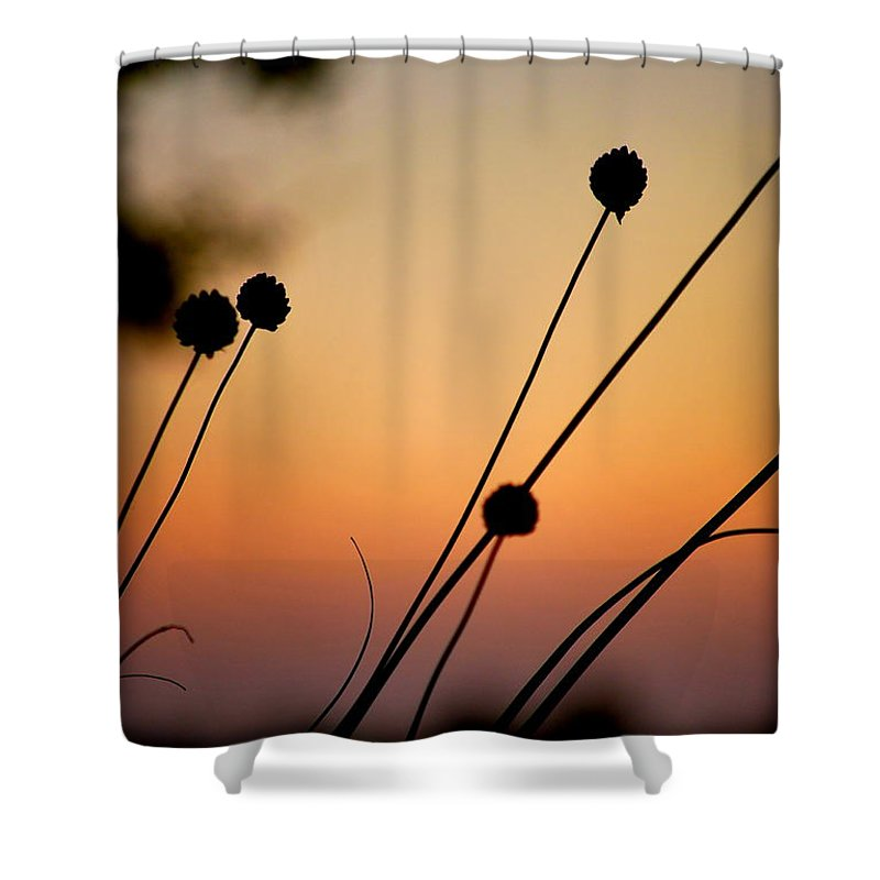 Silhouette Shower Curtain featuring the photograph Flower Silhouettes I by Kathy Sampson