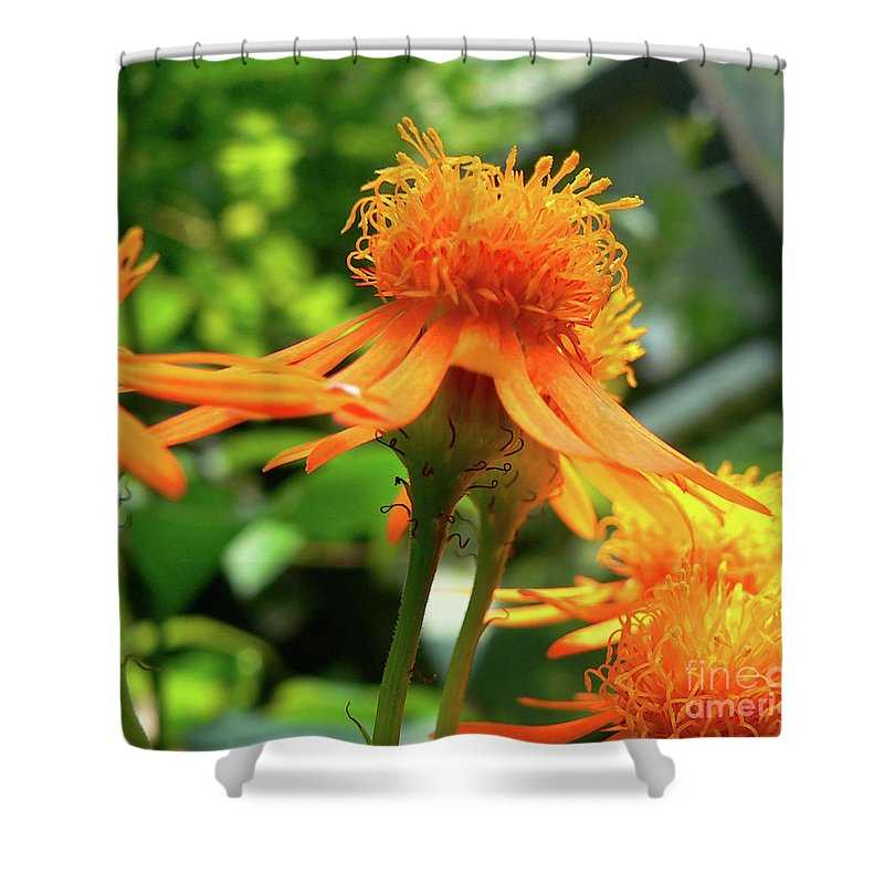 Flower Shower Curtain featuring the photograph Flower Top by Angela Wright
