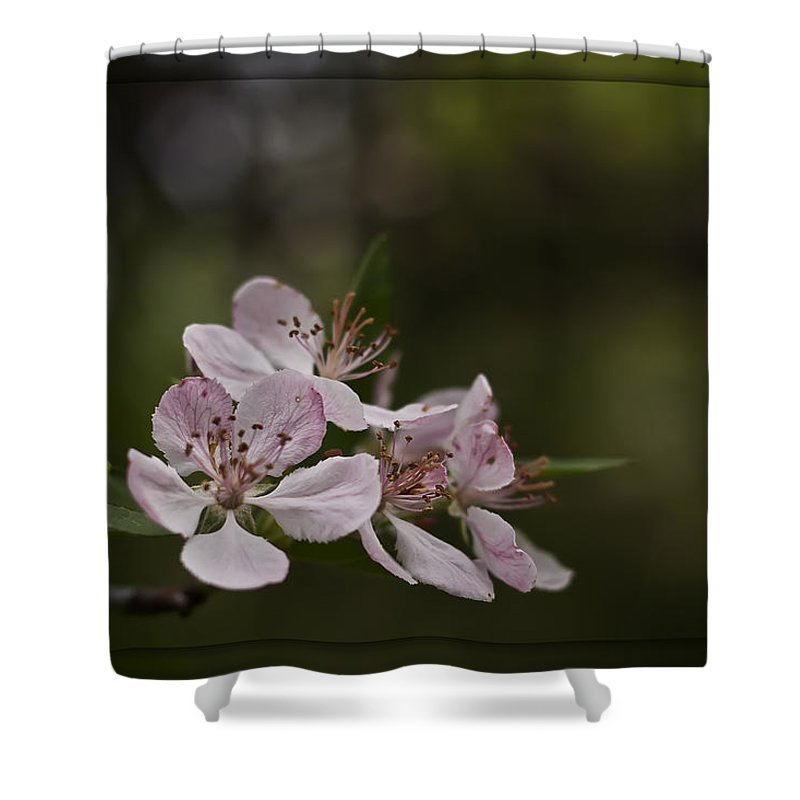 Petal Shower Curtain featuring the photograph Flowering Crabapple by Scott Wood