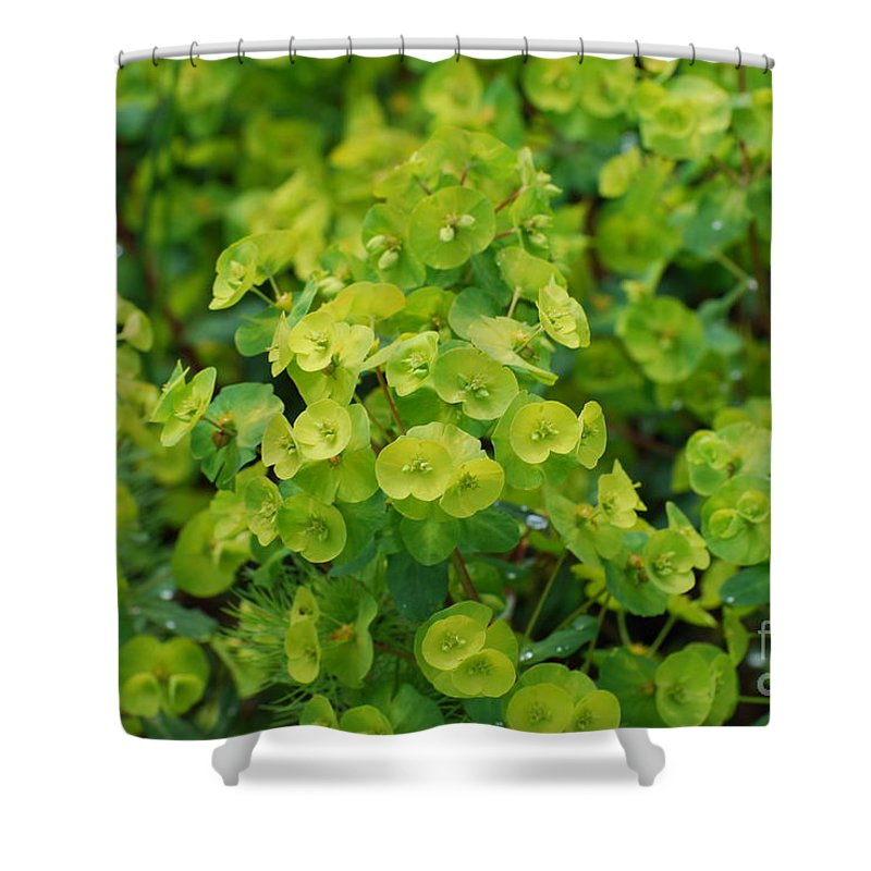 Euphorbia Flowers Shower Curtain featuring the photograph Flowering Euphorbia by DejaVu Designs