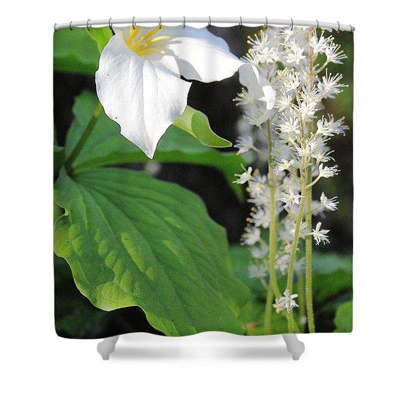 Garden Shower Curtain featuring the photograph Flowers In The Garden by Stephen Hobbs