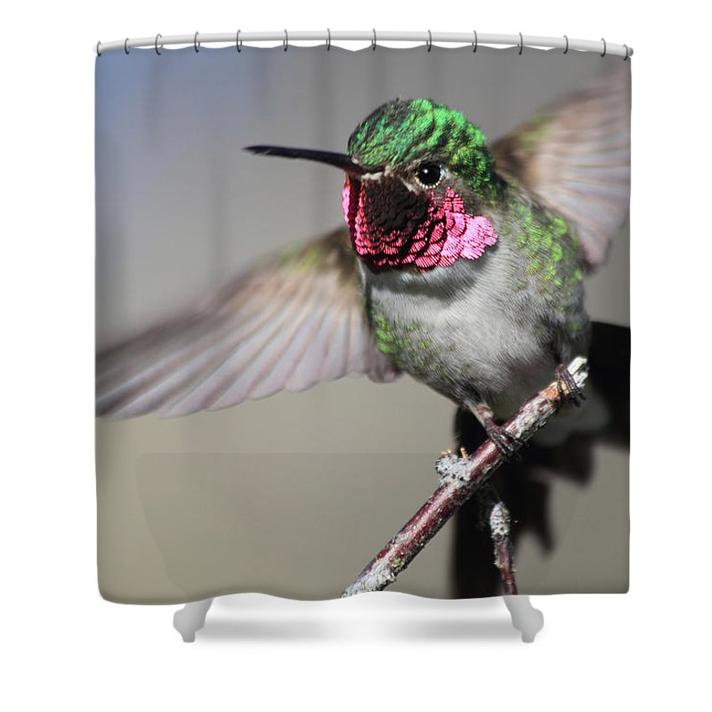 Ruby Throated Hummingbird Shower Curtain featuring the photograph Fluttering by Shane Bechler