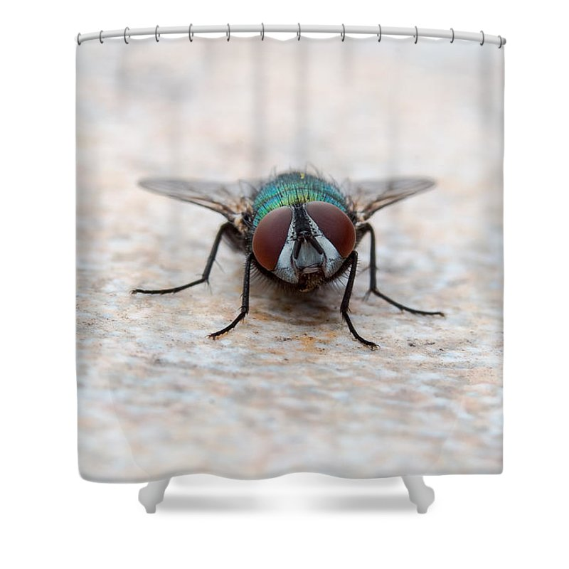 Fly Shower Curtain featuring the photograph Fly by Gaurav Singh