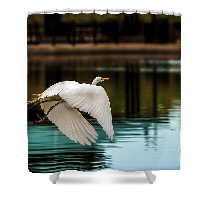 Birds Shower Curtain featuring the photograph Flying Egret by Robert Bales