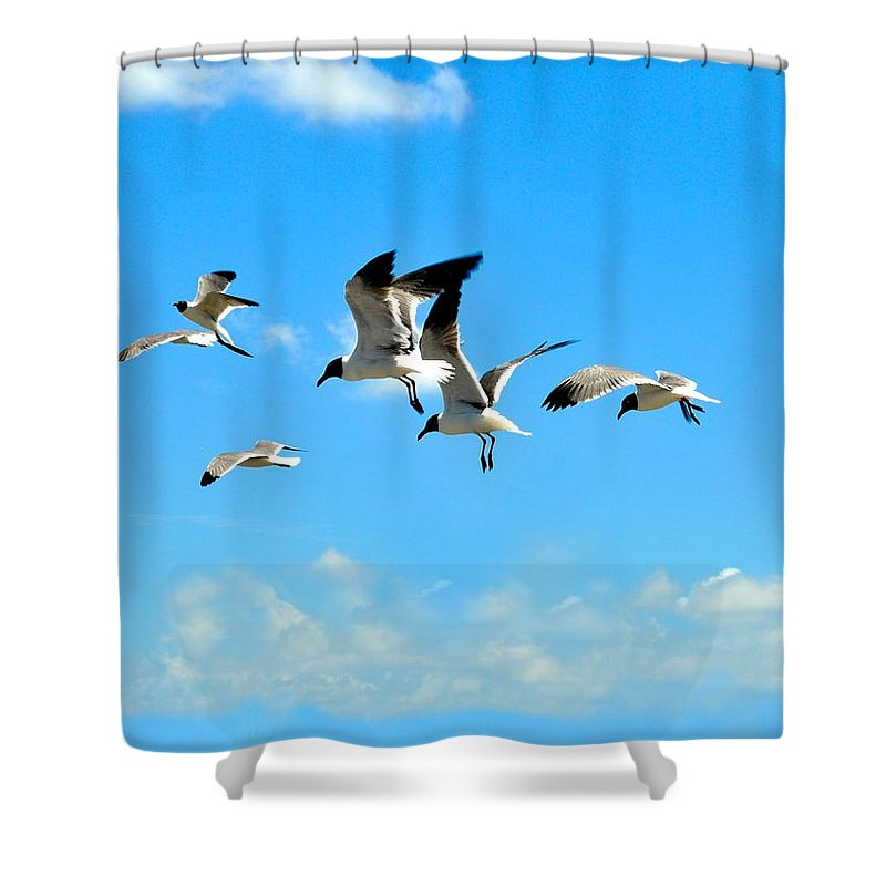 Sea Gulls Shower Curtain featuring the photograph Flying Gulls by Kristina Deane
