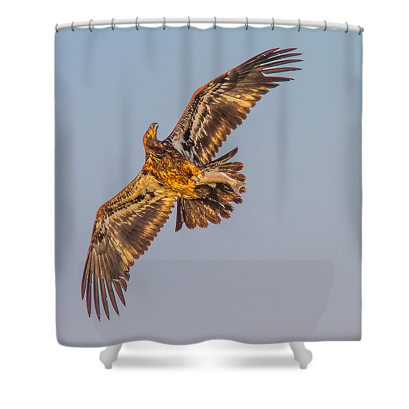 Eagles Shower Curtain Featuring The Photograph Flying Upside Down Golden Eagle By Brian Williamson