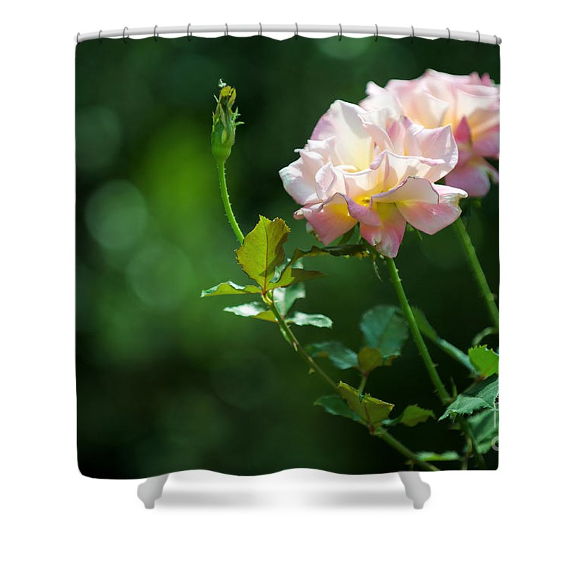 Flower Shower Curtain featuring the photograph Focus by Yew Kwang