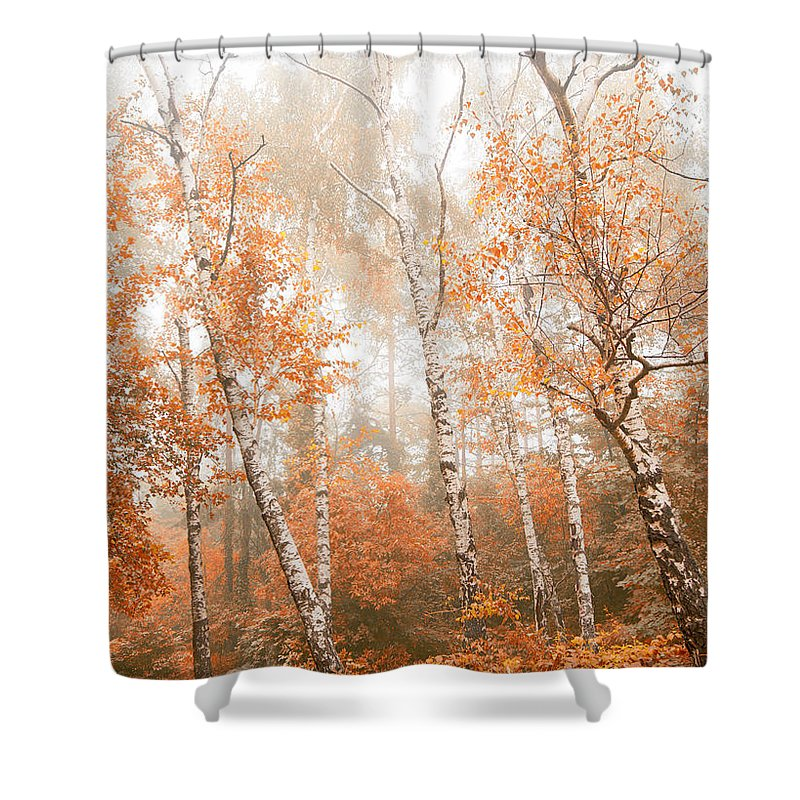 Wilderness Shower Curtain featuring the photograph Foggy Autumn Aspens by Eti Reid