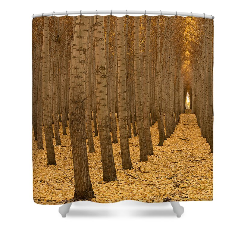 Forest Shower Curtain featuring the photograph Forest Cathedral - One by Lori Grimmett
