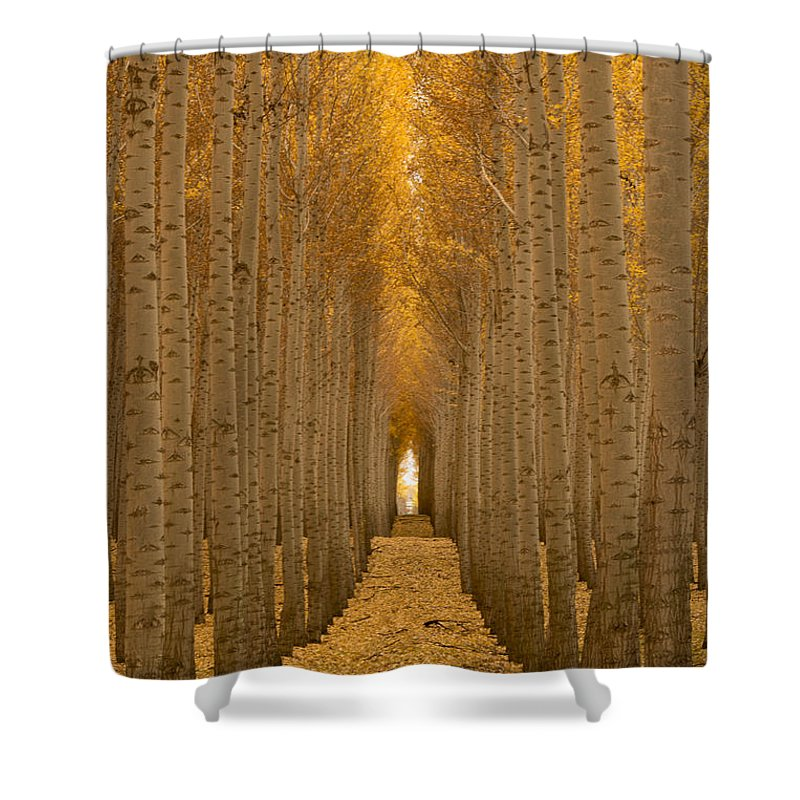 Tree Shower Curtain featuring the photograph Forest Cathedral - Two by Lori Grimmett