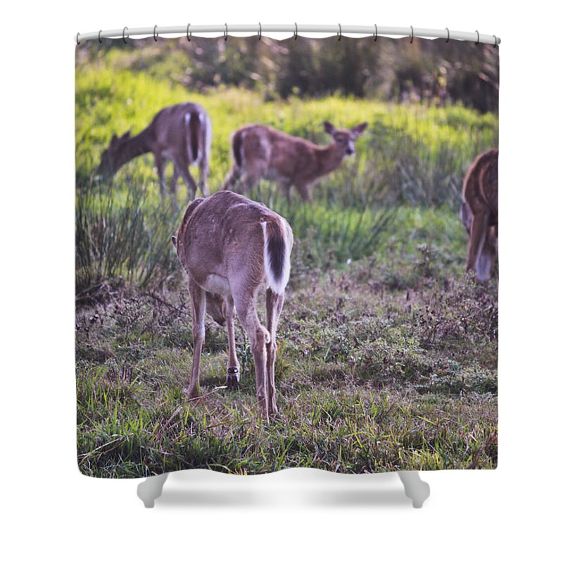 Deer Shower Curtain featuring the photograph Forest Dreams by Eti Reid