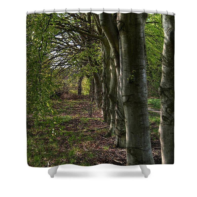 High Shower Curtain featuring the photograph Forest Walk Hdr by Antony McAulay