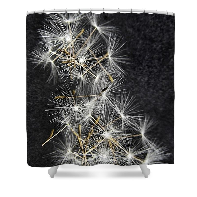 Dandelion Shower Curtain featuring the photograph Forgotten Wishes by Marianna Mills