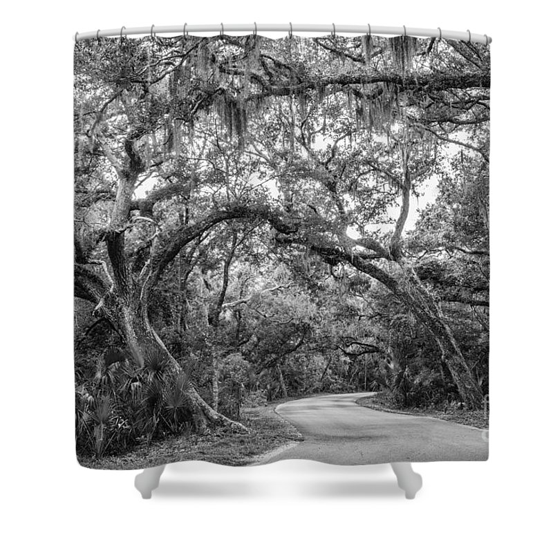 Oak Tree Shower Curtain featuring the photograph Fort Clinch Live Oaks by Dawna Moore Photography