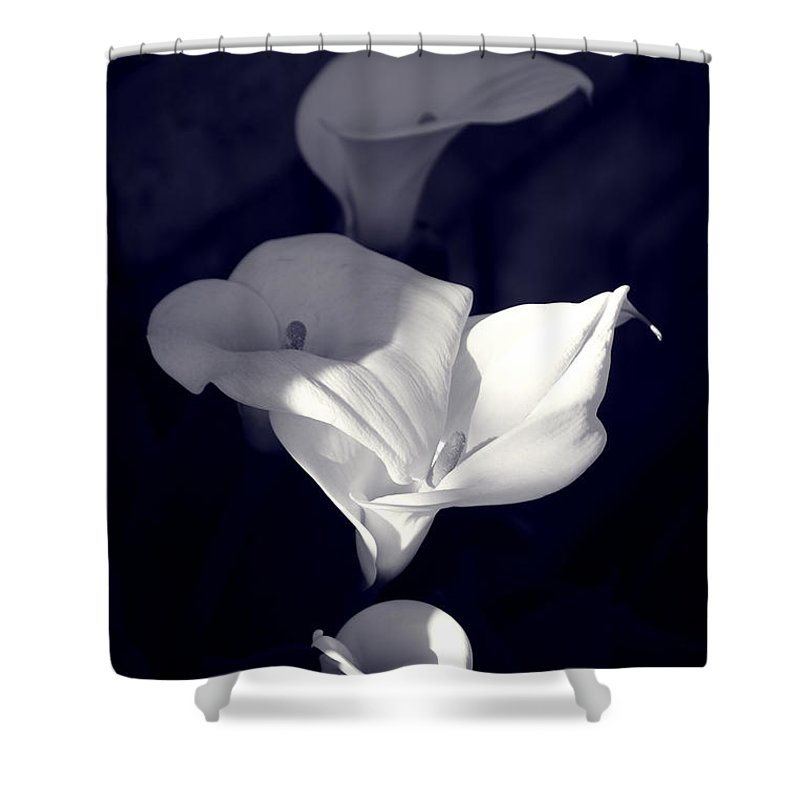 Calla Lily Shower Curtain featuring the photograph Four Calla Lilies In Shade by Richard J Thompson