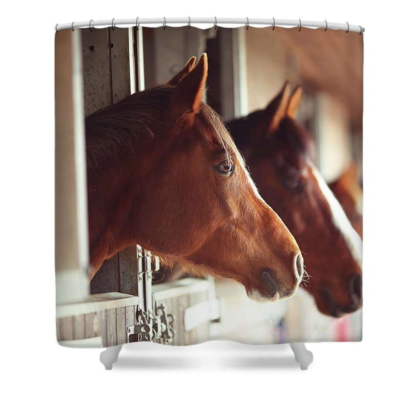Horse Shower Curtain featuring the photograph Four Horses In Stables by Olivia Bell Photography