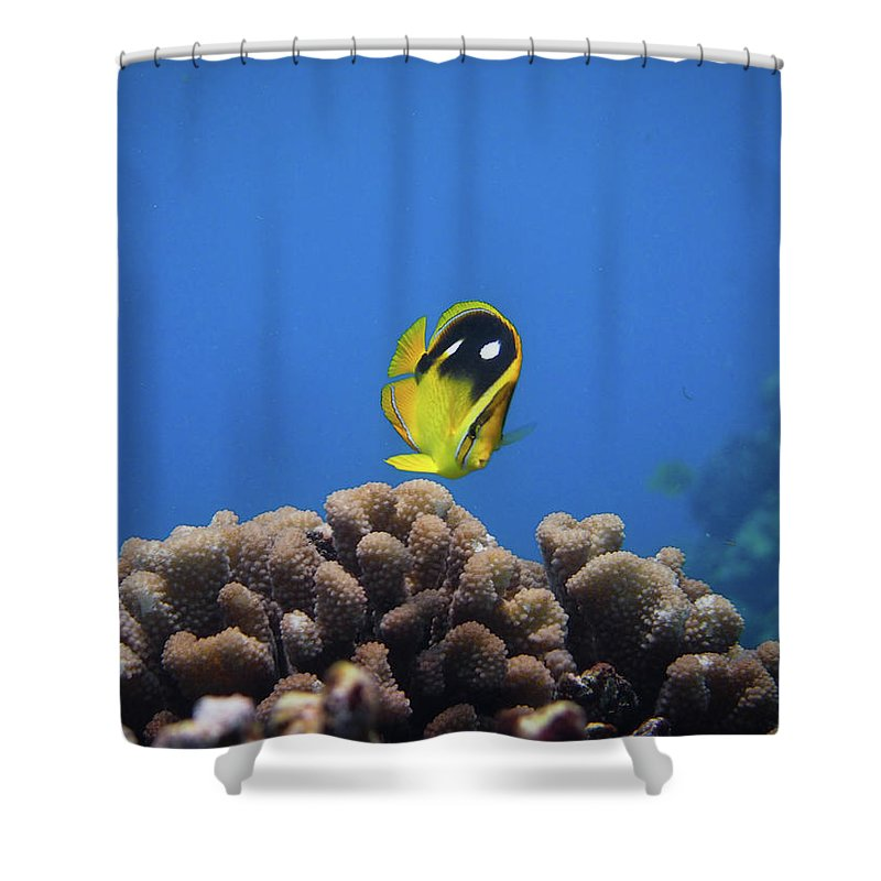 Underwater Shower Curtain featuring the photograph Four Spot Butterfly by Taiki Sakai