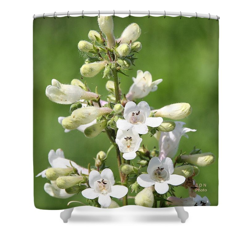 Fox Glove Breadtonge Shower Curtain featuring the photograph Fox Glove by Eric Noa