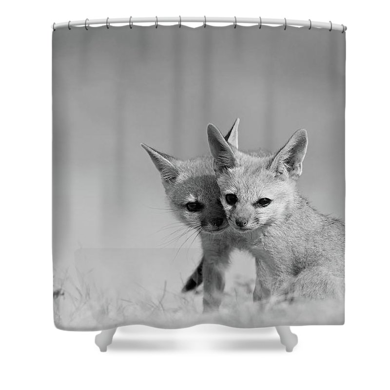 Grass Shower Curtain featuring the photograph Fox Tits by Santanu Nandy