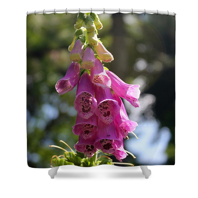 Foxglove Shower Curtain featuring the photograph Foxglove by Carolyn Stagger Cokley