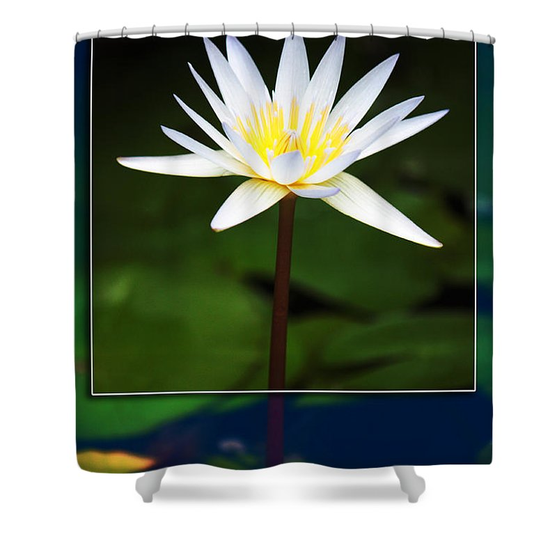 White Flower Shower Curtain featuring the photograph Framed Serenity by Nishanth Gopinathan