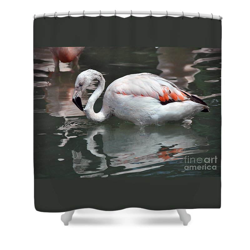 Flamingo Shower Curtain featuring the photograph Framingo by Savannah Gibbs