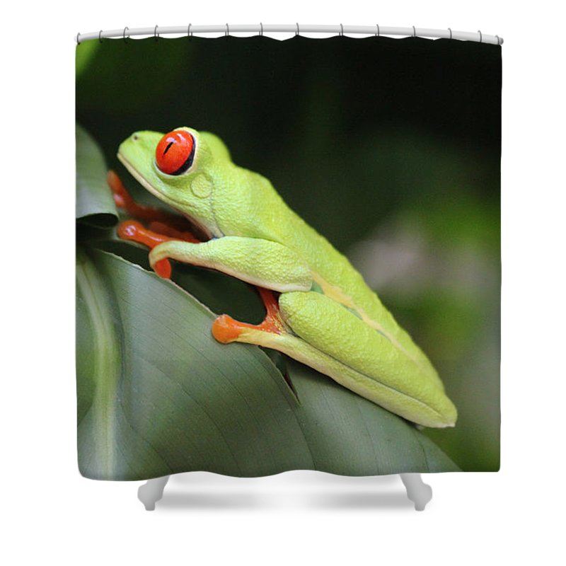 Frog Shower Curtain featuring the photograph Freddy Wakes Up by Lorraine Baum