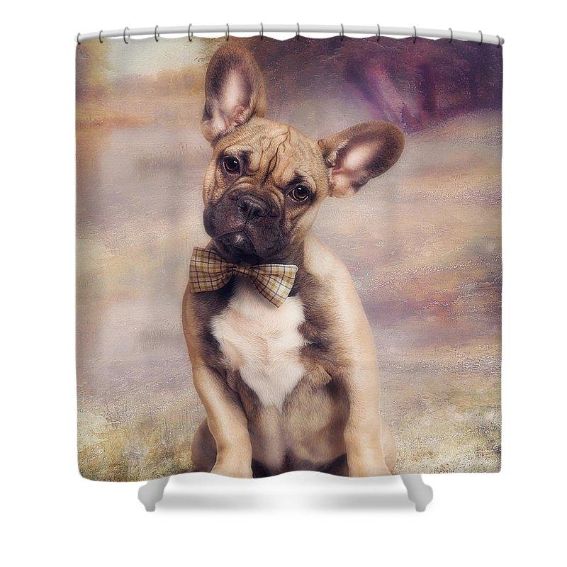 French Bulldog Shower Curtains