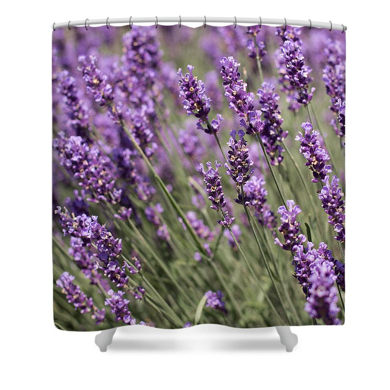 Lavender Shower Curtain featuring the photograph French Lavender by Barbara McMahon