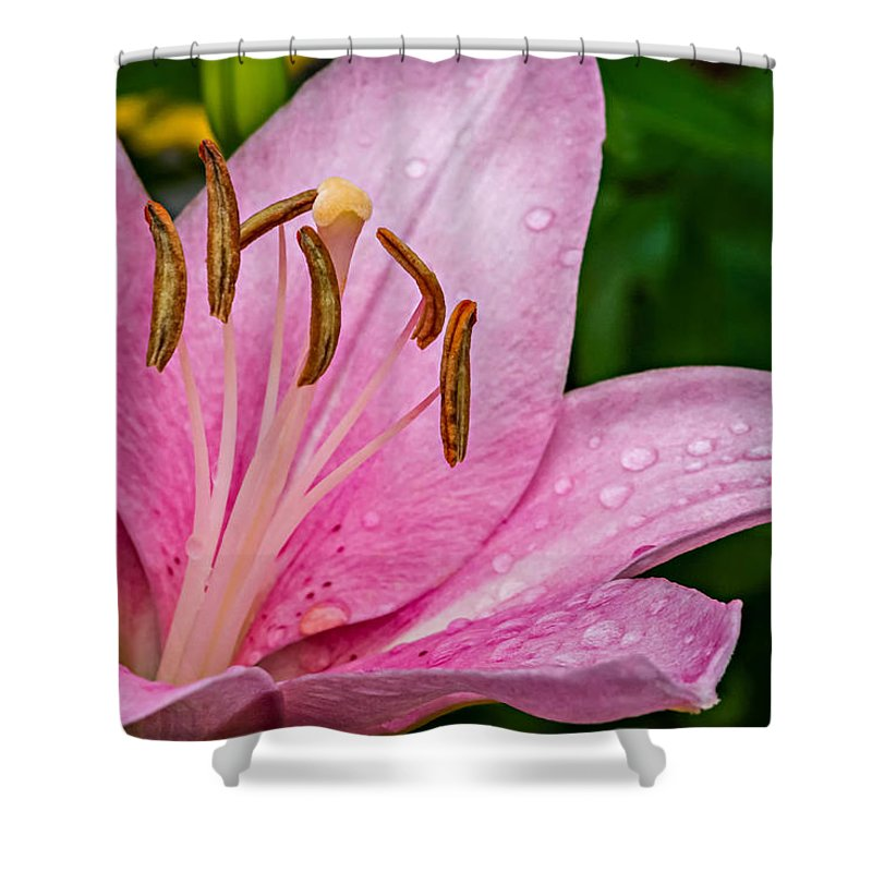 Flower Shower Curtain featuring the photograph Fresh From The Shower by Steve Harrington