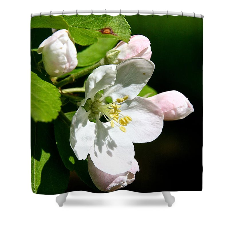 Flower Shower Curtain featuring the photograph Fresh Fruit Blossoms by Susan Herber