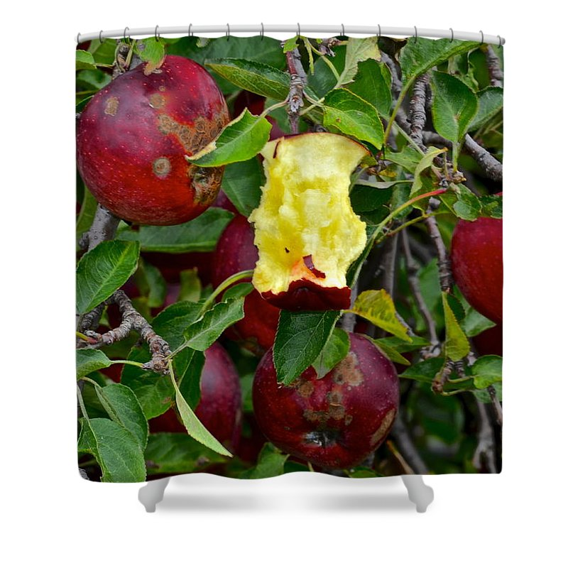 Fresh Shower Curtain featuring the photograph Fresh Fruit by Frozen in Time Fine Art Photography