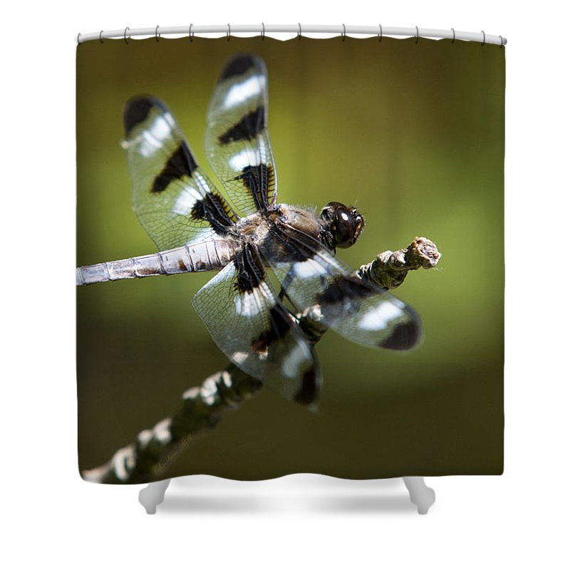 Dragonfly Shower Curtain featuring the photograph Fresh Morning Dragonfly by Christina Rollo