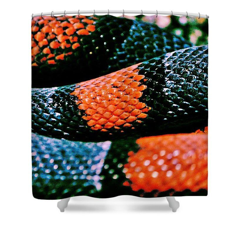 Milk Snake Shower Curtain featuring the photograph Friend Of Jack by Benjamin Yeager