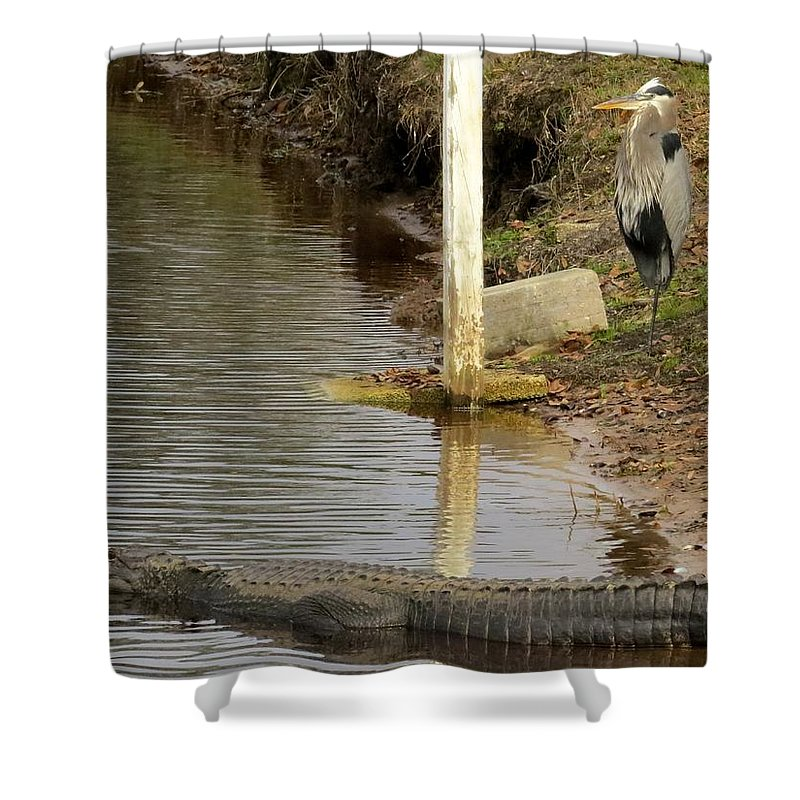 Alligator Shower Curtain featuring the photograph Friendly Hunting Together by Zina Stromberg