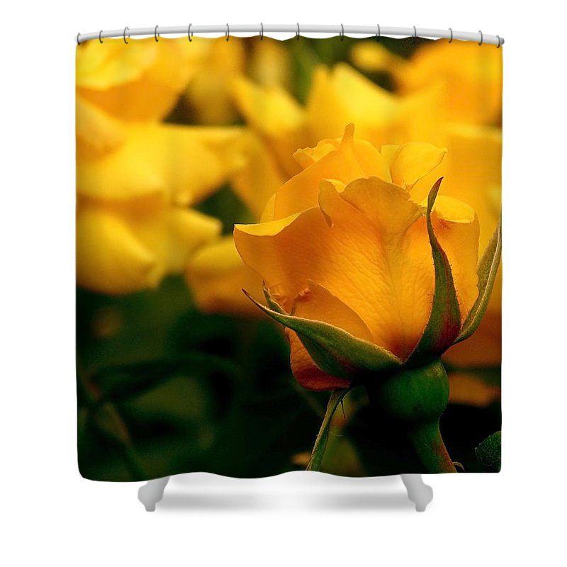 Rose Shower Curtain featuring the photograph Friendship Roses by Rona Black