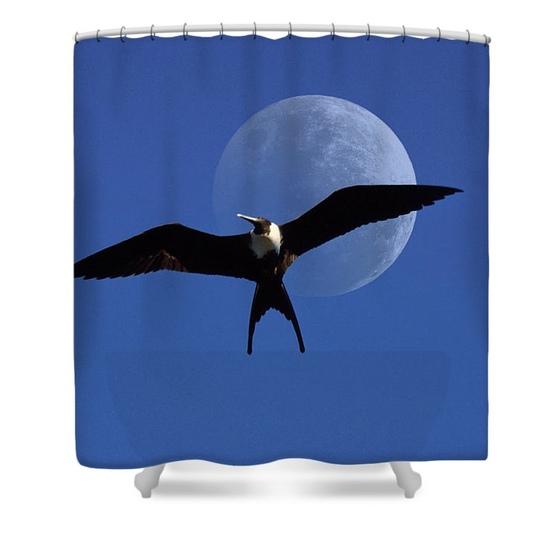 Frigate Shower Curtain featuring the photograph Frigatebird Moon by Jerry McElroy