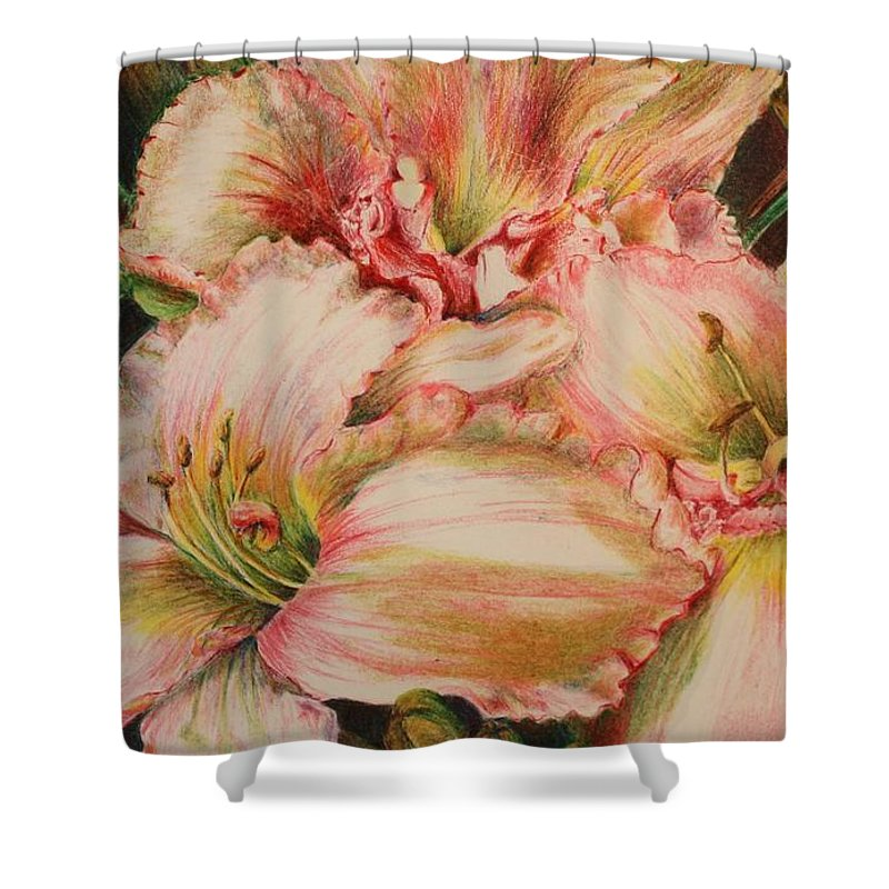 Day Lilies Shower Curtain featuring the drawing Frilly Pinks by Barbara Ebeling