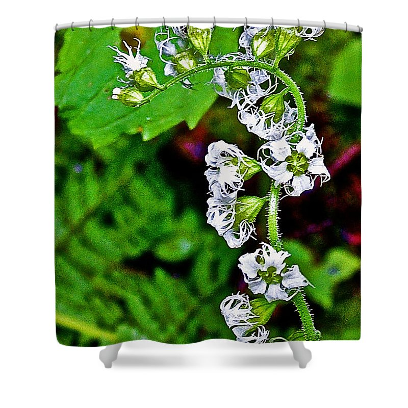 Fringe Cups On Clatsop Loop Trail In Ecola State Park Shower Curtain featuring the photograph Fringe Cups On Clatsop Loop Trail In Ecola State Park-oregon by Ruth Hager