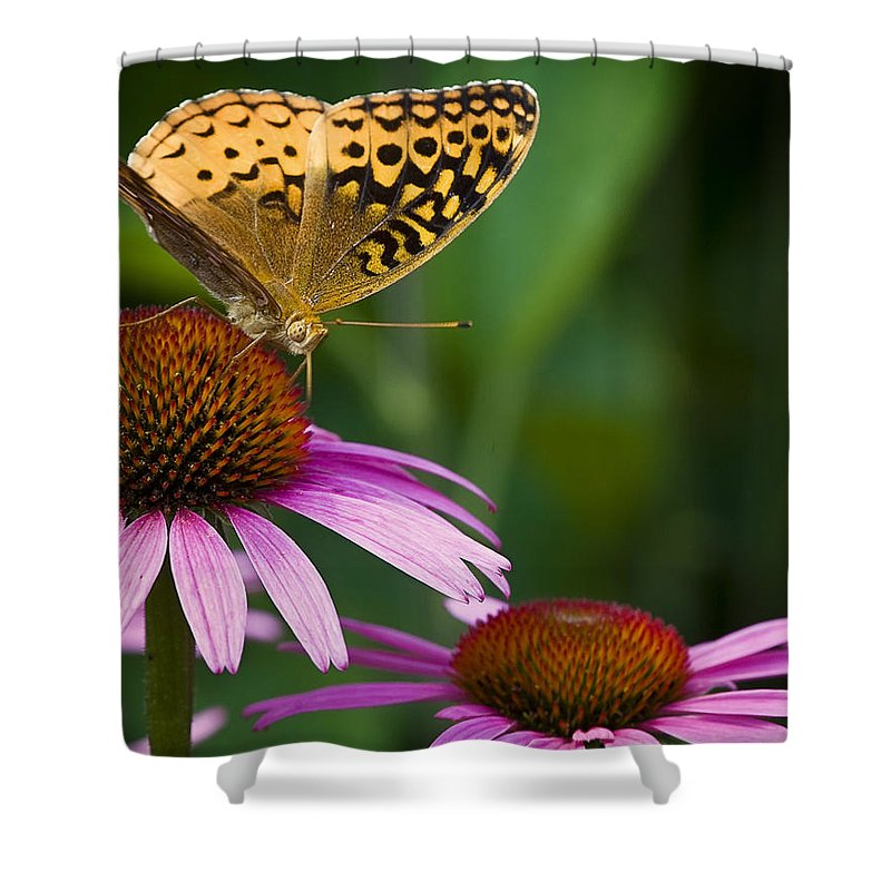 Butterfly Shower Curtain featuring the photograph Fritellary On Cone Flower by Michael Dougherty