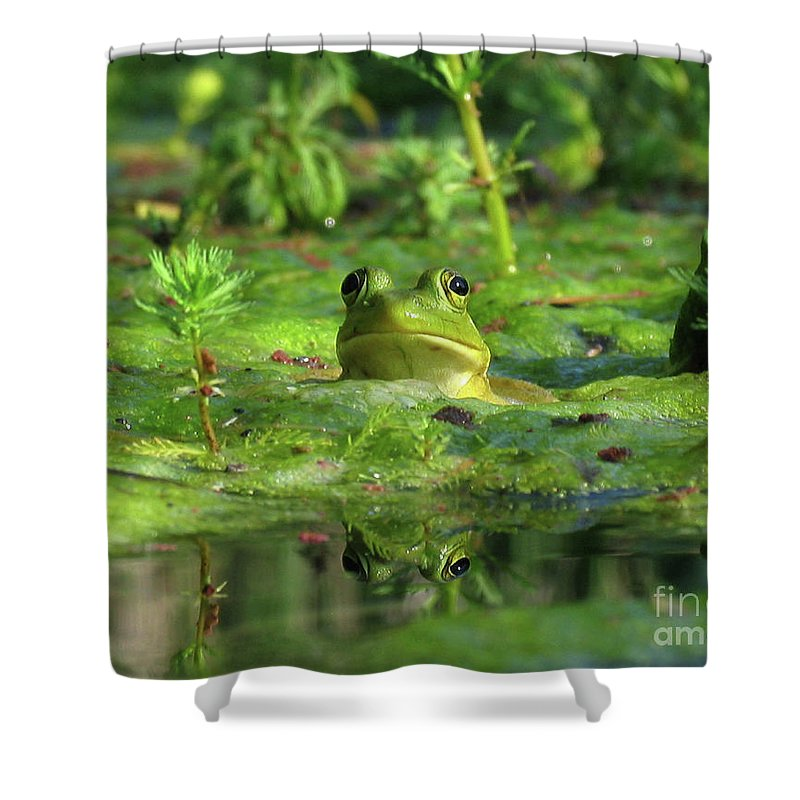 Frog Shower Curtain featuring the photograph Frog by Douglas Stucky