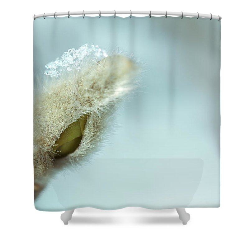 Tree Shower Curtain Featuring The Photograph Frost By Shane Holsclaw