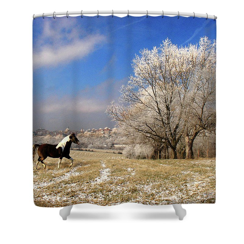 Landscape Shower Curtain featuring the photograph Frost by Steve Karol