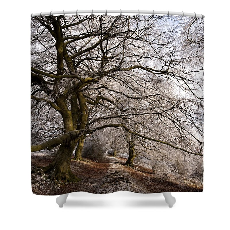 Bare Shower Curtain featuring the photograph Frosted Path by Anne Gilbert