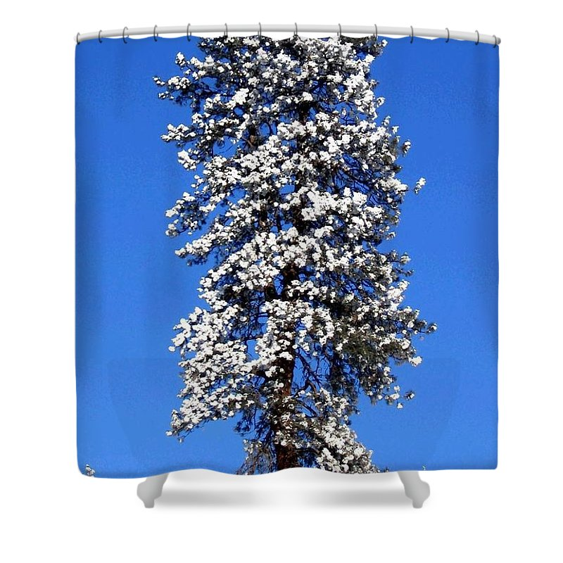 Frost Shower Curtain featuring the photograph Frosty Pine by Will Borden
