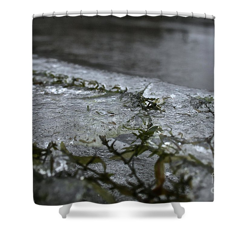 Outdoors Shower Curtain featuring the photograph Frozen Milfoil by Susan Herber
