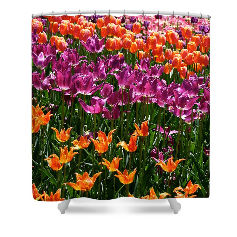 Flower Shower Curtain featuring the photograph Fruity Tulips by Susan Herber